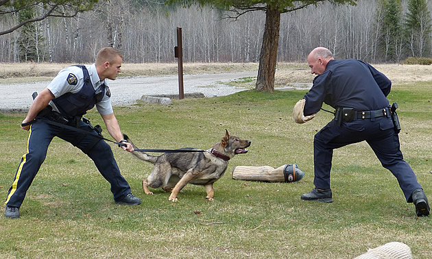 Two RCMP officers staging an attack with a police service dog.