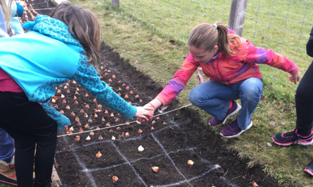 Children are planting some of the tulip bulbs for the EcoGarden's celebration of Canada's 150th anniversary.