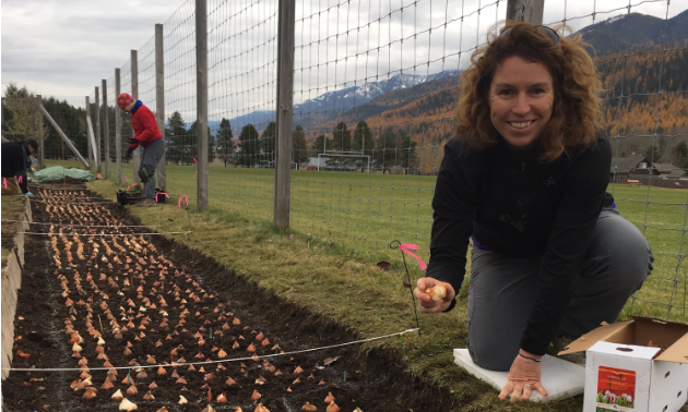 A woman is one of the many volunteers planting tulip bulbs last October.