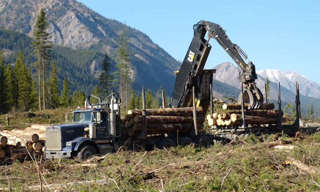 A logging truck getting loaded in the bush.