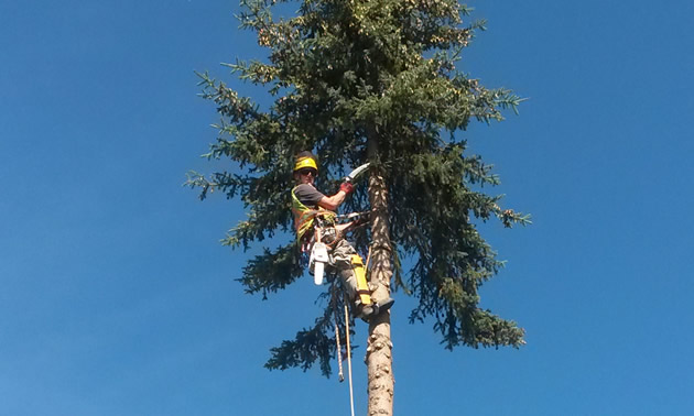 As a dedicated arborist, Chris Nicholson goes to great heights in the course of his workday.