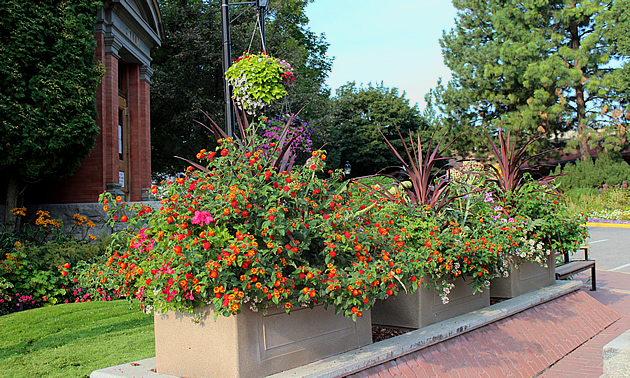 Bright flower pots show the vibrant side of Grand Forks.