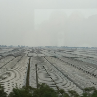 Greenhouses in China, as seen from the bullet train