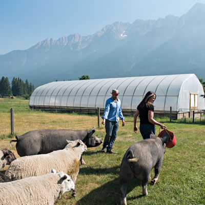 Sacha and Tyler from Cutter Ranch located in Fort Steele, in the East Kootenay, raise heritage pork, pasture chicken and beef.
