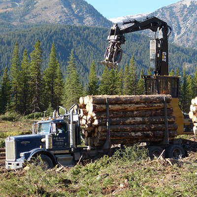 A logging truck is being loaded at a cut block.