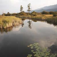 NE wetlands near Golden