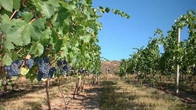 Skimmerhorn Winery and Vineyard, Creston, B.C.