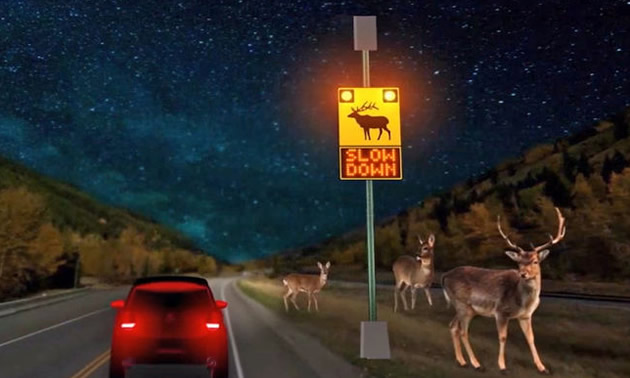 The Wildlife Detection System on Highway 3, designed to protect wildlife and increase safety to motorists.