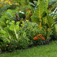 Vegetables and flowers growing.