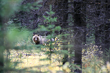 Photo of a bear in the woods