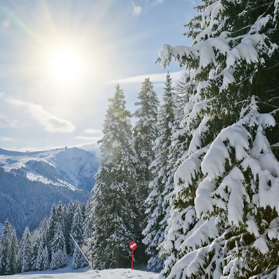 Trees covered in snow along an alpine ski run.