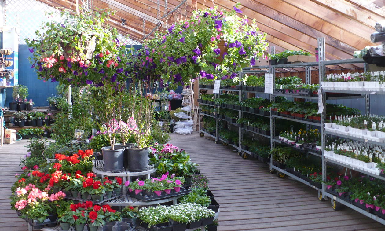 Many flowers are on display inside the Garden Centre at Kaslo Building Supplies.