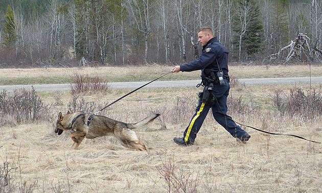 RCMP Constable Mike Zinn follows his German Shepherd Fizz.