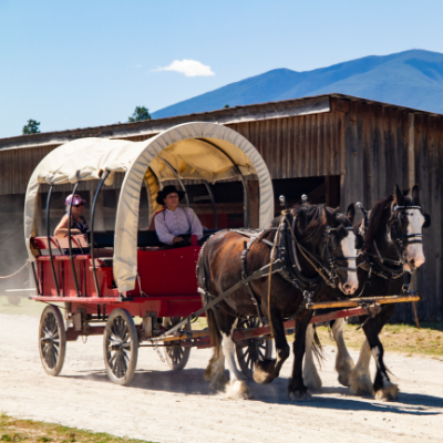 A red wagon with a white linen roof holds passengers as two brown and white Clydesdale horses stroll through Fort Steele.