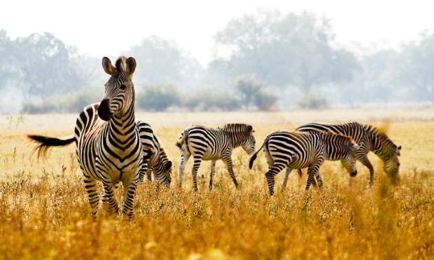 """""""We yearned to provide intimate and life-changing safaris in the bush that mirrored our own experiences throughout Africa,"""" said Fannuel Nsingo, co-owner of Escape to Africa Safaris."""