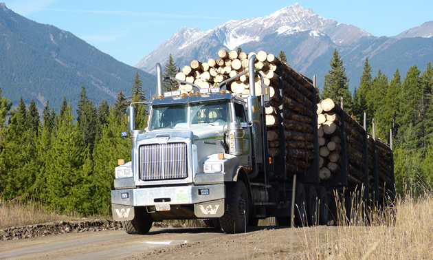 A loaded logging truck coming out of the bush.