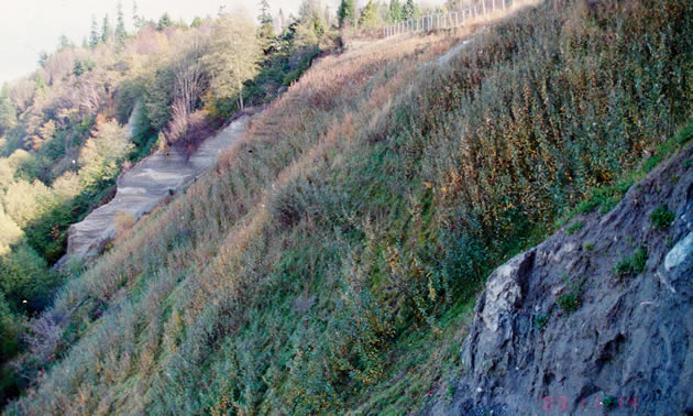 This steep terrain was successfully revegetated by Interior Reforestation.