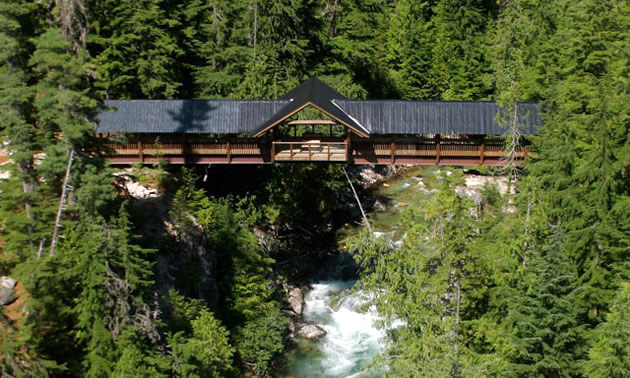 The Kuskanax Creek Footbridge, near the Village of Nakusp, B.C., is the perfect spot to take in the surrounding forest.