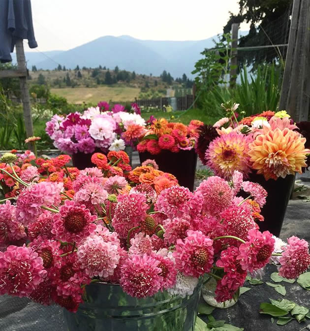 Brittany's Flower Farm in Creston, B.C.