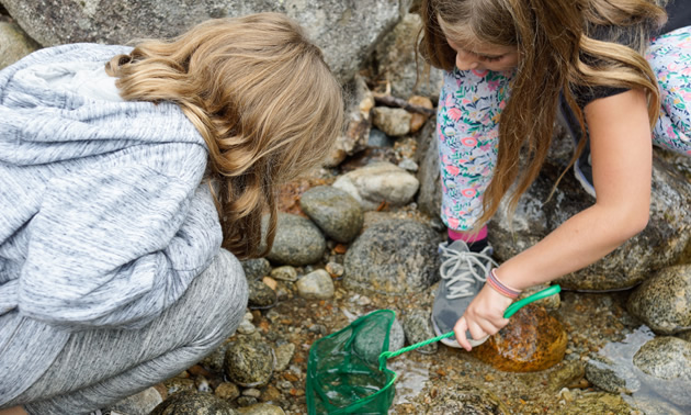 Two students dip-netting for bugs.