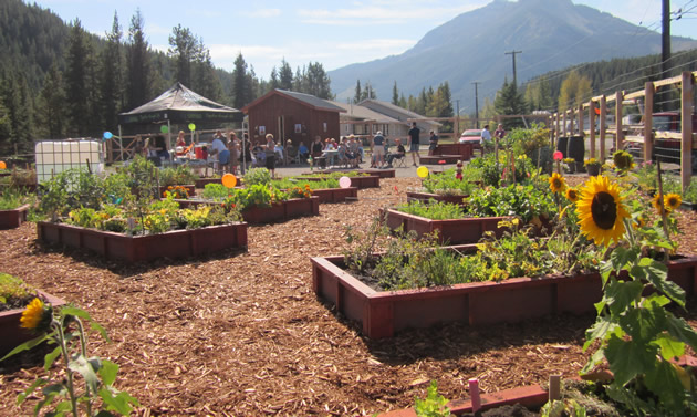 An attractive row of wood-lined garden beds grow vegetables.