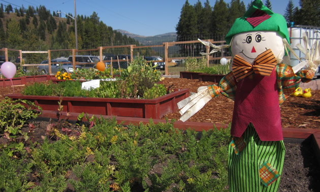 A decorative scarecrow stands in front of the community garden beds.