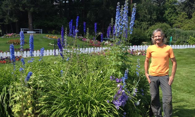 As manager of Cominco Gardens, Dan Matheson spends a lot of time in the gardens. Here, he is standing next to tall purple delphiniums.