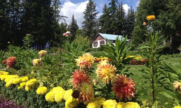 The white and brown gardener's house sits as a backdrop to a diversity of colourful flowers.
