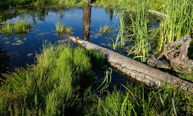 The Trust's Ecosystem Enhancement Program will help maintain and improve ecological health and native biodiversity in a variety of ecosystems, such as wetlands, fish habitat, forests and grasslands.