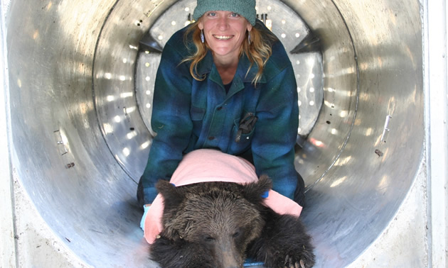 Gillian Sanders with a tranquilized grizzly bear