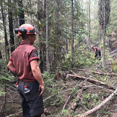 BC Wildfire personnel working at clearing dead brush in forest.