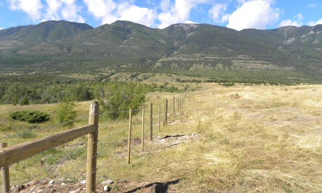 photo of fence line