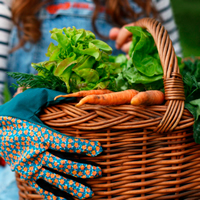 A girl in overalls holds out a basket full of carrots and greens. She's wearing gardening gloves.