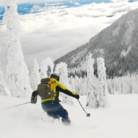 A skier in a yellow jacket carves down a powdery slope with snow-covered trees.