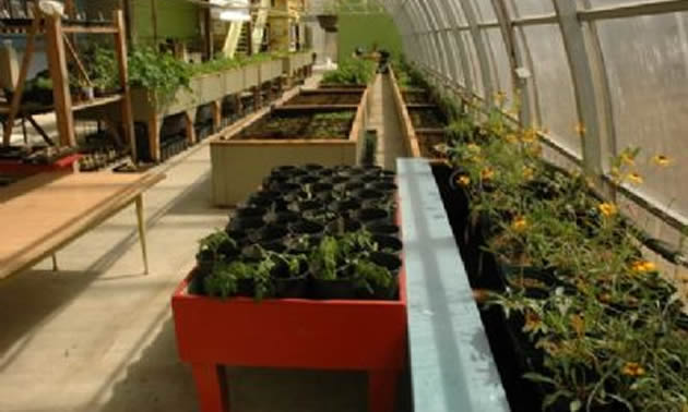 Plant beds have greenery and flowers inside a greenhouse.