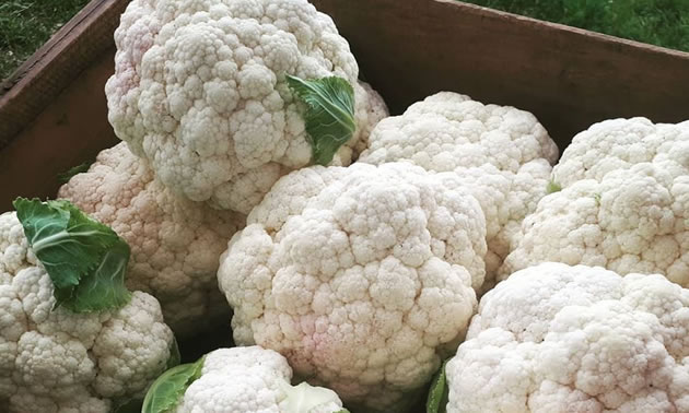 Gorgeous bunches of cauliflower