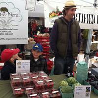 Danny Turner picks apples from his farm, Just-a-Mere Organic Farm in Creston, B.C.