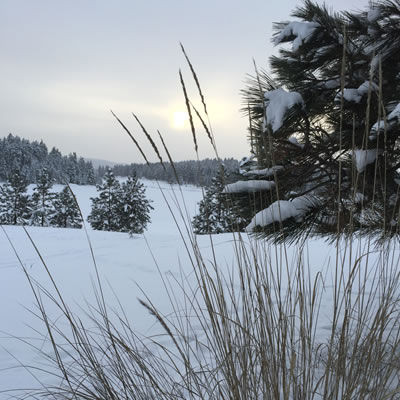 Picture of snowy winter scene with pine tree in foreground.