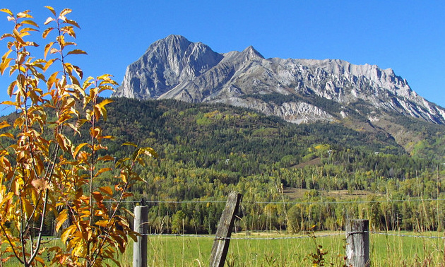 There are autumn colours on a small tree in the foreground, an old wooden fence and mountains set against a blue sky in the background.