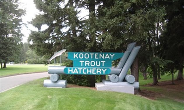 A blue sign that says Kootenay Trout Hatchery.