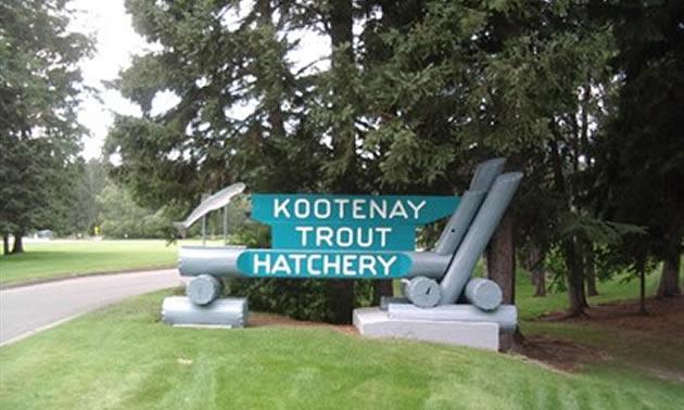 Kootenay Trout Hatchery sign.