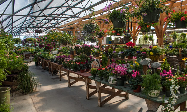 Blooms Garden Centre: Flowers For Every Occasion In Creston, B.C.