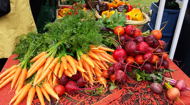 Carrots and radishes spread on a table.