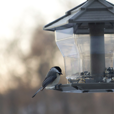A black-capped chickadee sits on a bird feeder.
