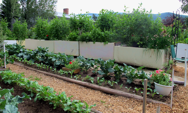 A row of old freezers make elevated planter boxes filled with green growth.