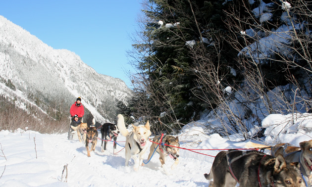 A dog sled from Revelstoke Dogsled Adventures leads guests through wonderful scenery along a snowy trail.