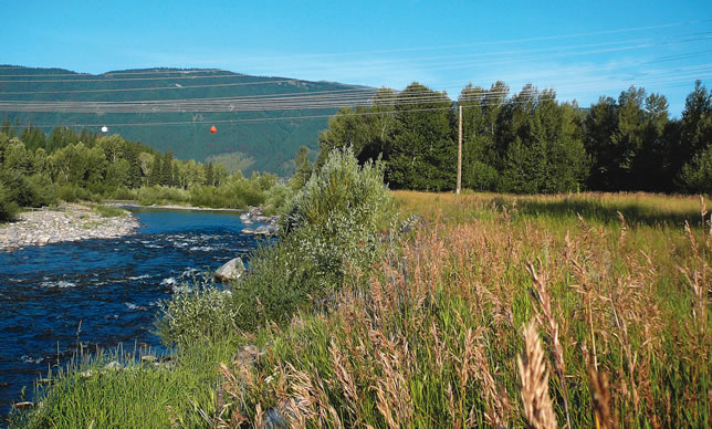 A stream with wild grasses growing along its shoreline