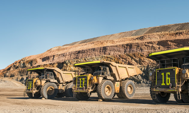Line up of large mining trucks.