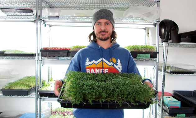 Tiny Greens in Nelson, B.C. Growing microgreens for local restaurants and homes.