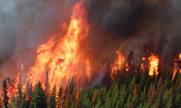 Wildfire in forest.